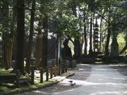 Pagoda in woods, Naritasan Park, Chiba-ken, Japan, photo