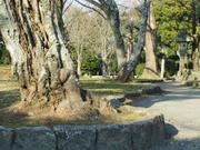Tree trunks, Naritasan Shinshoji Temple, Narita, Chiba-ken, Japan, photo