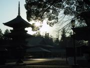 Sunset at three-storied pagoda, Naritasan Shinshoji Temple, Narita, Chiba-ken, Japan, photo
