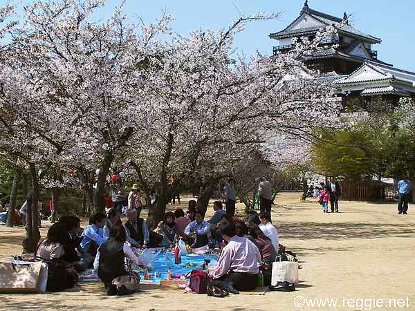 hanami blossom