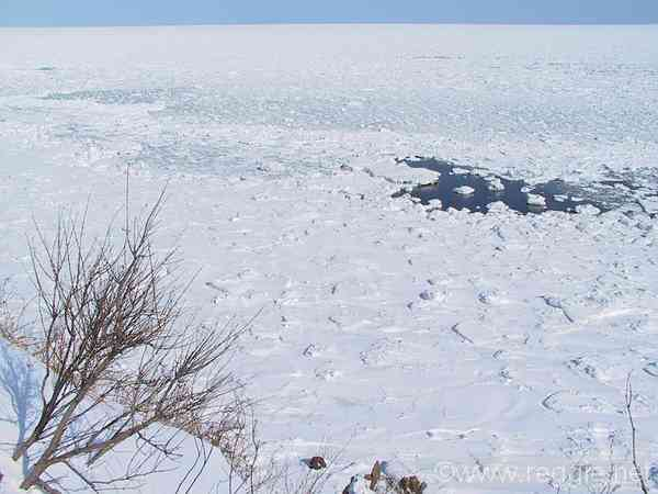 Ice floes and tree, Cape Notoro, Abashiri, Hokkaido, Japan, photo