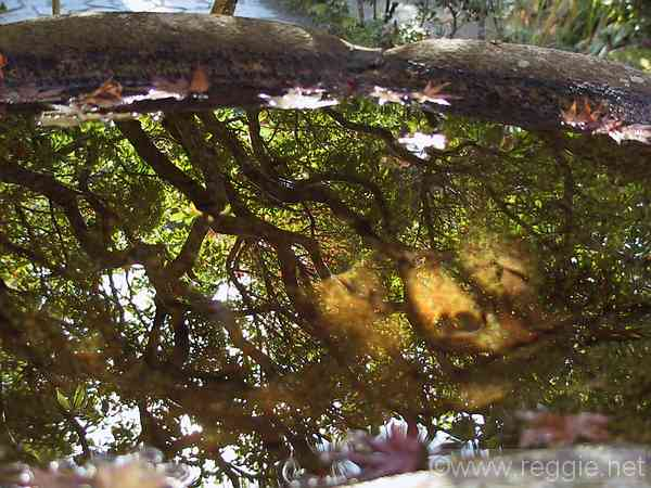 Reflections in source pool, Honenin temple, Kyoto, Japan, photo