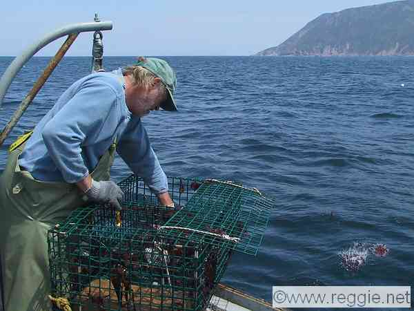 Image gallery lobster fishing for Nova scotia fishing