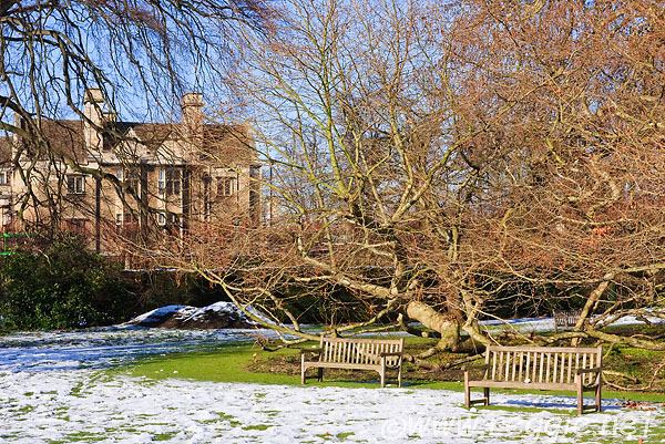 Snow around the Oriental Plane, Emmanuel College