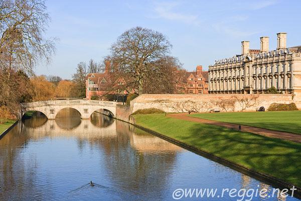 Reggie Thomson 39 S Photography Blog Ducks On The River Cam Swimming Towards Clare Bridge