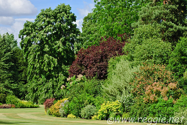 Reggie thomson 39 s photography blog summer lawns bushes for Garden trees england