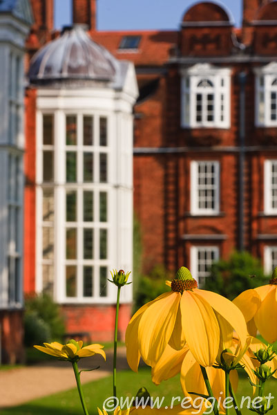 Rudbeckia Herbstsonne, looking to College Hall and Sidgwick hall, Newnham College, Cambridge