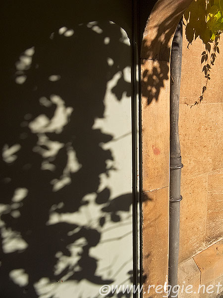 A lead drainpipe on the side of a sandstone archway with overhanging leaves and their shadows, Sidney Sussex College, Cambridge