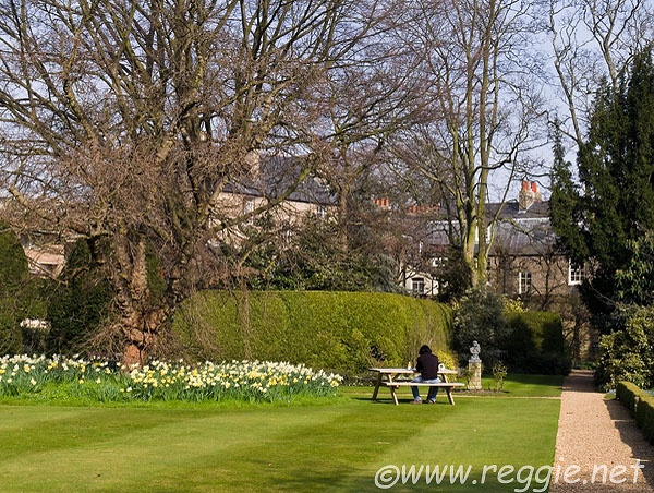 Picnic by daffodils, Sidney Sussex College
