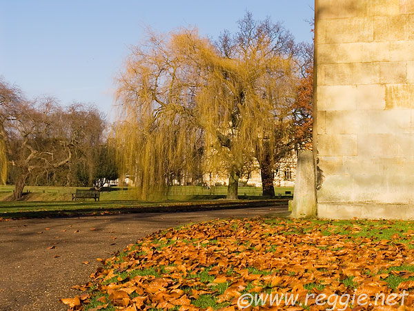 Weeping Willow and beech leaves, Trinity college, Cambridge