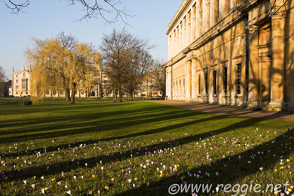 Reggie Thomson's photography blog » Crocuses on the lawns in