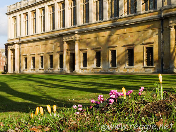 Crocuses and cyclamen, by the Wren Library, Trinity College, Cambridge, England