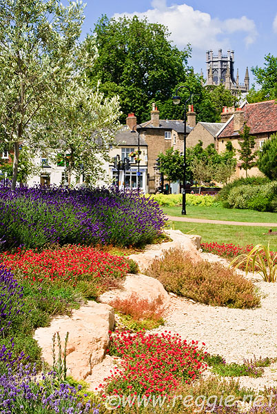 Lavender and other rockery flowers, Ely