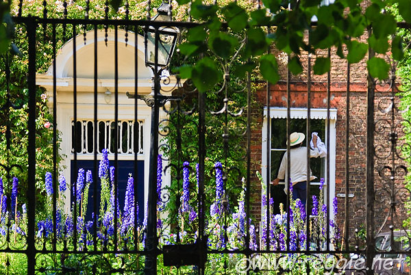 Delphiniums and window cleaning, Ely