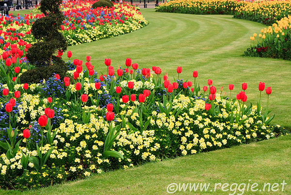 Reggie Thomson's photography blog » Flower beds