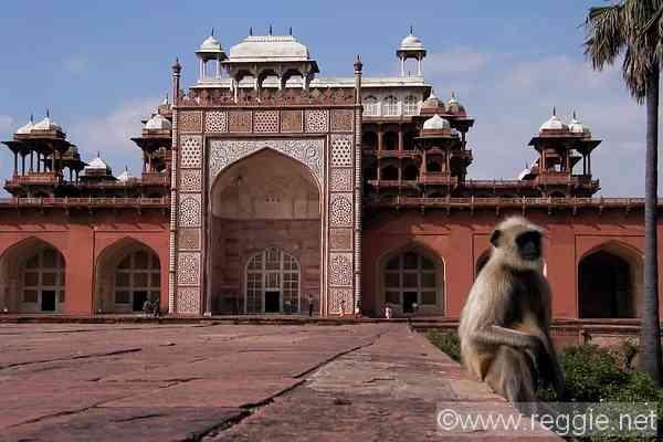 http://www.reggie.net/photos/india/uttar_pradesh/agra/sikandra/14653_akbars_mausoleum_monkey-600.jpg