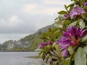 Rhododendrons, Kylemore Abbey, Co. Galway, Irelandの写真