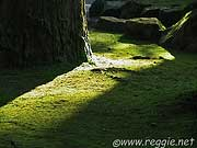 Moss around tree, Eiheiji Temple, Fukui-ken, Japan, photo