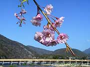 Togetsukyo bridge and cherry blossoms, Arashiyama, Kyoto, Japan, photo