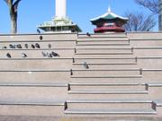 Pigeons on steps, Mt. Yongdu, Busan, Korea, photo