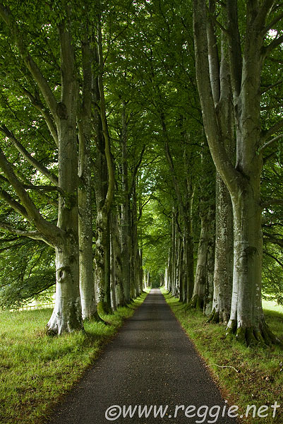 Reggie thomson 39 s photography blog an avenue of trees for Garden trees scotland